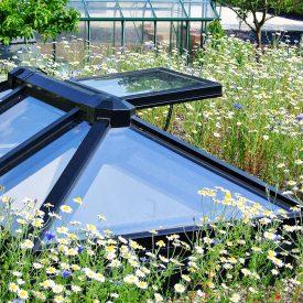 Organic Roofs garden design